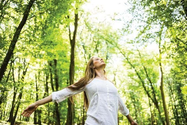 media/image/forest-therapy_1_orig.jpg
